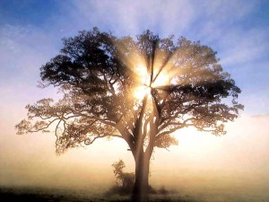 Oak tree with sun rays symbolizing a new small business