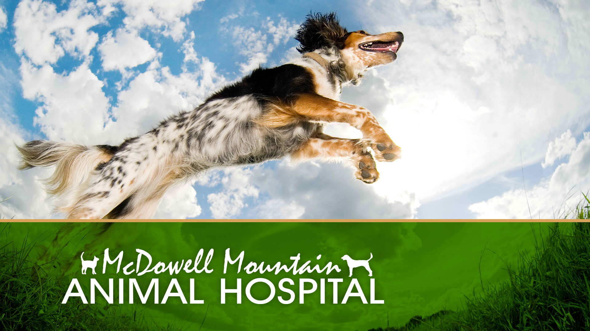 Animal Hospital Branding, Marketing, and Design