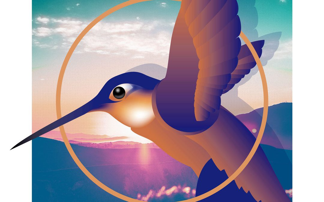 Hummingbird Illustration with Adobe Illustrator and Photoshop